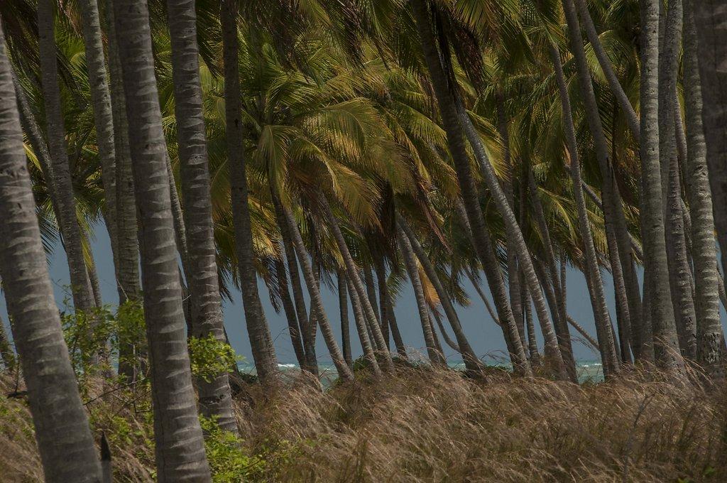 PraiadoPatachoAL-DDMMAAAA-FotoFredJordao0479.jpg