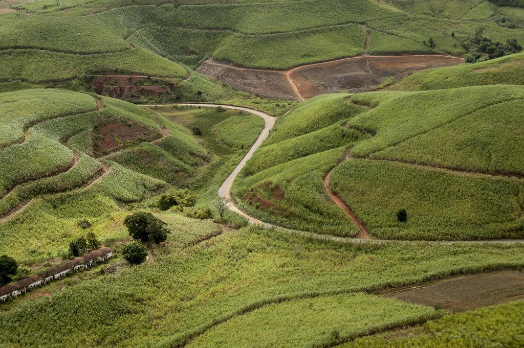 Estrada Vicinal. Zona da Mata Sul de Pernambuco.
