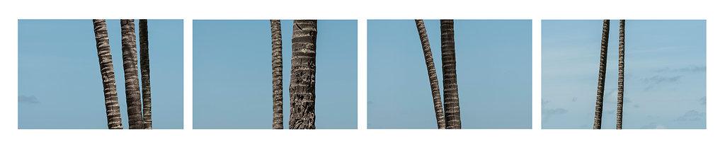 Coqueiros-FredJordao.jpg